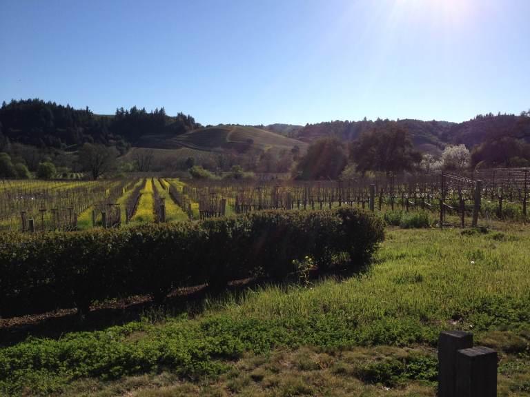 Dutcher Crossing Winery